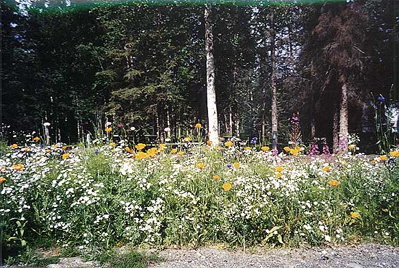 Colorful wildflowers - one of the many things you'll enjoy at Real Alaskan Cabins and RV Park